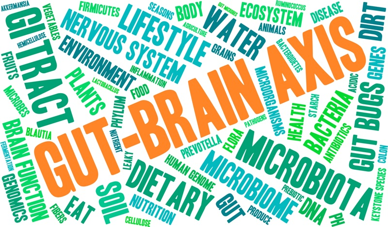gut and brain - PerformancePro